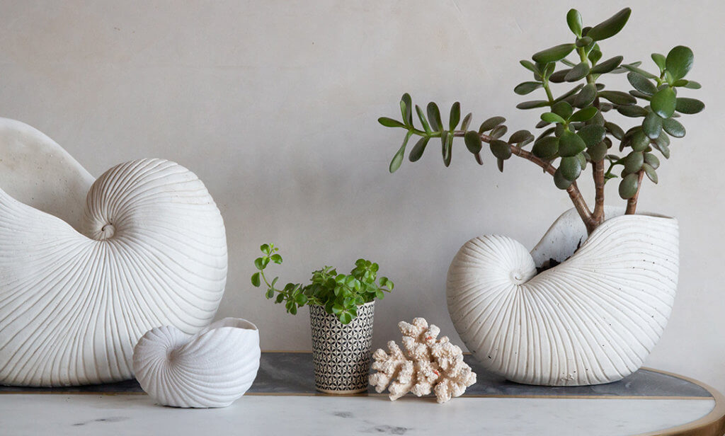 lifestyle of large shells filled with plants on a console table