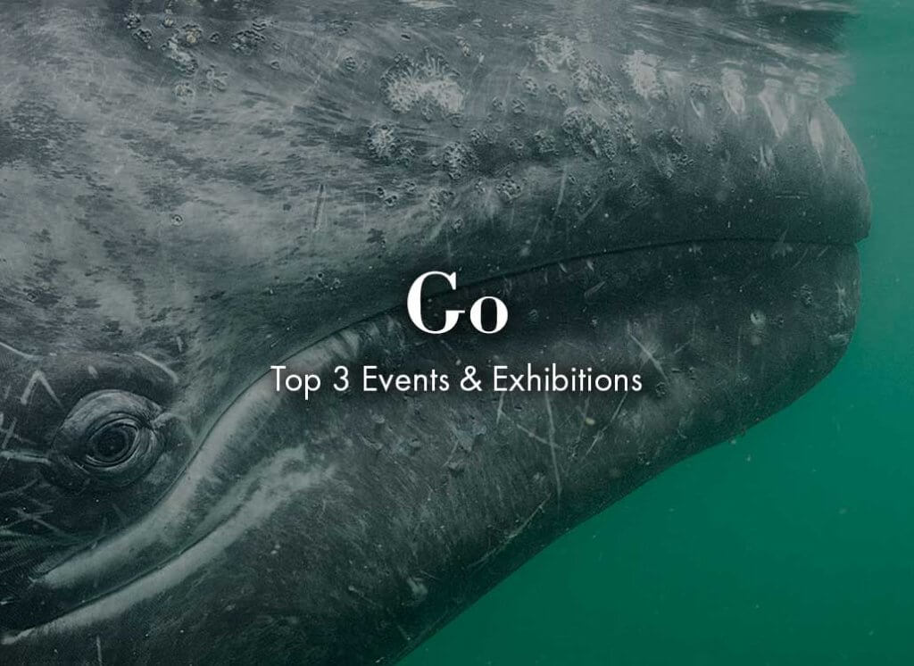 wildlife photographer of the year exhibition included in the rockett st george november 2019 hot list